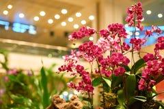 Aéroport de Singapour Changi Images libres de droits