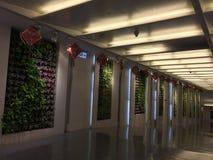 Aéroport de Taïpeh Photos libres de droits