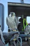 Aéroport ornithologique de Pulkovo de service Photographie stock libre de droits
