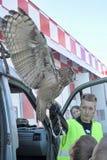 Aéroport ornithologique de Pulkovo de service Image libre de droits