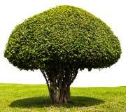 Aísla el ajuste del arbusto Imagen de archivo libre de regalías