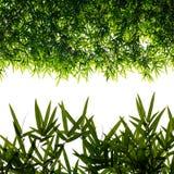 Aísla el fondo de las hojas de bambú Foto de archivo libre de regalías