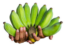 Aísla los fingeres que sostienen un plátano Imagen de archivo libre de regalías