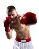 Aíslan al boxeador de Professionl en blanco Imagenes de archivo