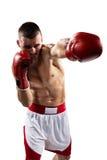 Aíslan al boxeador de Professionl en blanco Imagen de archivo libre de regalías