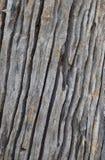 Aísle el arte de la vieja textura de madera Imagen de archivo libre de regalías