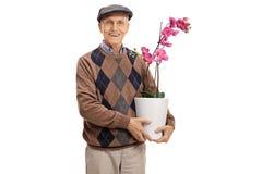 Aîné avec une fleur d'orchidée dans un pot Photo libre de droits