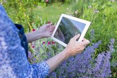 Aîné de femme prenant la photo avec son PC de comprimé dans le jardin Images libres de droits