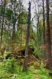 Aîné de pilier Sanctuaire russe de nature de Stolby de réservation Près de Krasnoïarsk Photographie stock