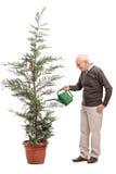 Aîné occasionnel arrosant un arbre conifére Images stock