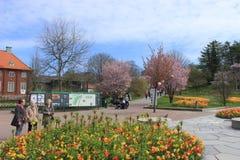 Aînés, passe-temps, fleurs, ressort, jour ensoleillé, jardin botanique de Gothenburg, Suède Image stock