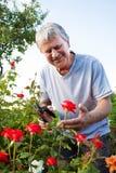 Aînés s'inquiétant des roses dans le jardin Image stock