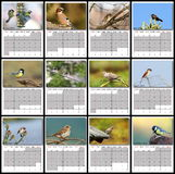 Año civil de los pájaros del jardín 2016 Fotos de archivo libres de regalías