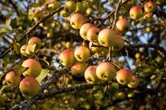 Año de Fruitfull Foto de archivo libre de regalías
