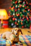 Año del perro Fotografía de archivo libre de regalías
