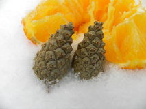 Año junto a las semillas anaranjadas del árbol de la nieve y del hielo Fotos de archivo libres de regalías
