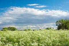 Año meadow.landscape Imagenes de archivo