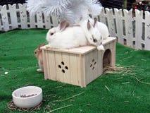 Año Nuevo. Casa 1. del conejo. Imagen de archivo