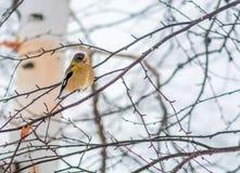 Año Nuevo de Celebratig de tarde del pájaro femenino del pájaro por el menos veinte Fotografía de archivo