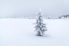 Año Nuevo de la nieve blanca spruce del invierno Imagenes de archivo