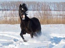 Año Nuevo del caballo Fotos de archivo libres de regalías