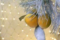 Año Nuevo del mandarín Foto de archivo libre de regalías