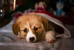 Año Nuevo del perrito imágenes de archivo libres de regalías