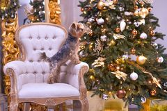 Año Nuevo del perro Fotos de archivo