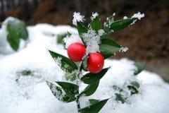 Año Nuevo natural y joyería de la Navidad Foto de archivo libre de regalías