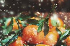 Año Nuevo, tarjeta de Navidad con las clementinas frescas o mandarinas con las luces festivas Imagen de archivo libre de regalías