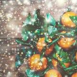 Año Nuevo, tarjeta de Navidad con las clementinas frescas o mandarinas w Fotografía de archivo libre de regalías
