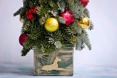 Año Nuevo y árbol de navidad de Nobilis Imagen de archivo libre de regalías