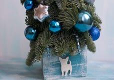 Año Nuevo y árbol de navidad de Nobilis Imágenes de archivo libres de regalías