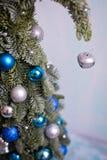 Año Nuevo y árbol de navidad de Nobilis Imagen de archivo