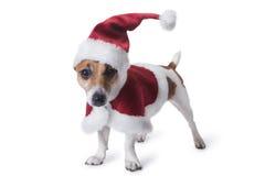 Año Nuevo y animales domésticos de la Navidad Imágenes de archivo libres de regalías