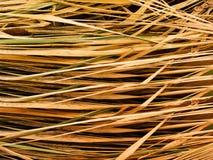 Año pasado seco de la hierba Imagen de archivo