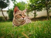 3 años de gato Fotos de archivo