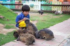 4 años de juego asiático feliz del niño con el grupo de conejos Imágenes de archivo libres de regalías