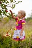 Años de la niña para escoger manzanas Imagen de archivo libre de regalías