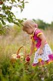 Años de la niña para escoger manzanas Fotografía de archivo