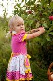 Años de la niña para escoger manzanas Fotos de archivo