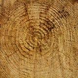 Años de madera de círculos Imagen de archivo libre de regalías