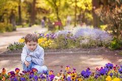 7 años de muchacho miran las flores coloridas Imágenes de archivo libres de regalías