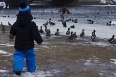 2 años de niño que alimenta pájaros salvajes en el lago Imagen de archivo