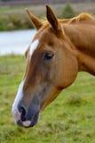 2014 años del caballo Fotos de archivo libres de regalías