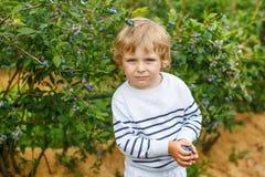 3 años del muchacho de arándanos de la cosecha en baya orgánica colocan Foto de archivo libre de regalías
