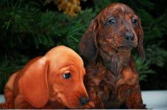 Años Nuevos de abeto con el perro basset de los juguetes Fotografía de archivo