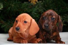 Años Nuevos de abeto con el perro basset de los juguetes Foto de archivo libre de regalías