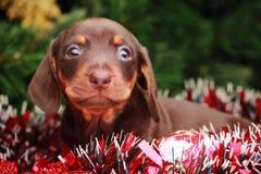 Años Nuevos de abeto con el perro basset de los juguetes Imágenes de archivo libres de regalías
