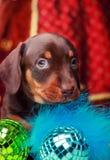Años Nuevos de abeto con el perro basset de los juguetes Fotografía de archivo libre de regalías
